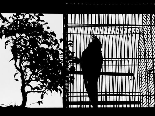 just-watching-freedom_4.jpg