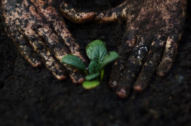 دست هايم را ميكارم، سبز خواهم شد، ميدانم